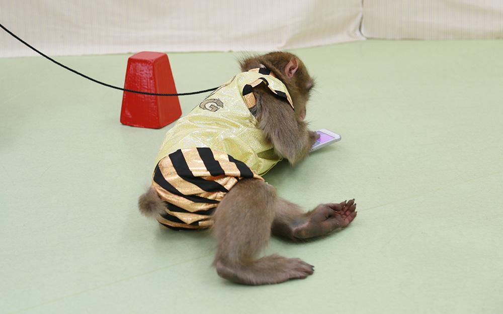 【徹底検証】サルにスマホを渡してみたら、サルなりの使い方があった