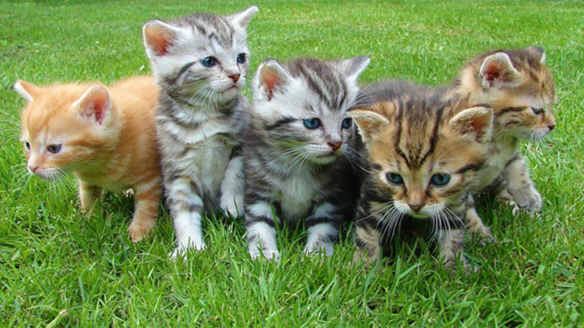 猫を飼いたくても飼えないときに気づきたい「かわいい猫は、ほとんど自動販売機だ!」